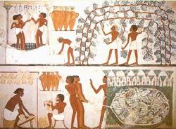 Sennik egipski - Potrawy, dania