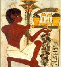 Sennik egipski - owoce