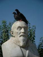 Gołębie - kreta-heraklion