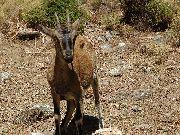 kreta - samaria - Wejście do wąwozu