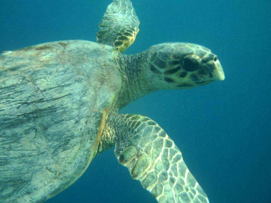 Żółwie Turtle