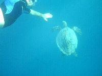 Nawet snorkując możemy zanurkować i przywitać się z żółwiem