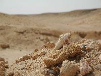 Muszle, korale na pustyni