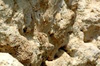Koralowce uwięzione w skałach