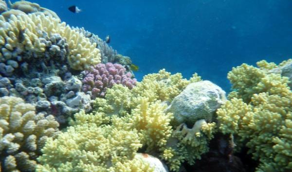 Safaga rafa Morza Czerwonego
