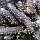Koralowce Rafa Podwodna Fauna Flora