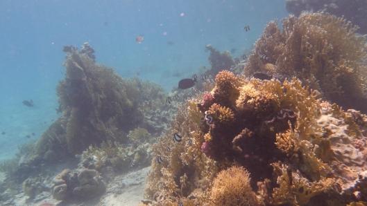 Podwodna koralowa wyspa