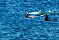 delfin_29.jpg