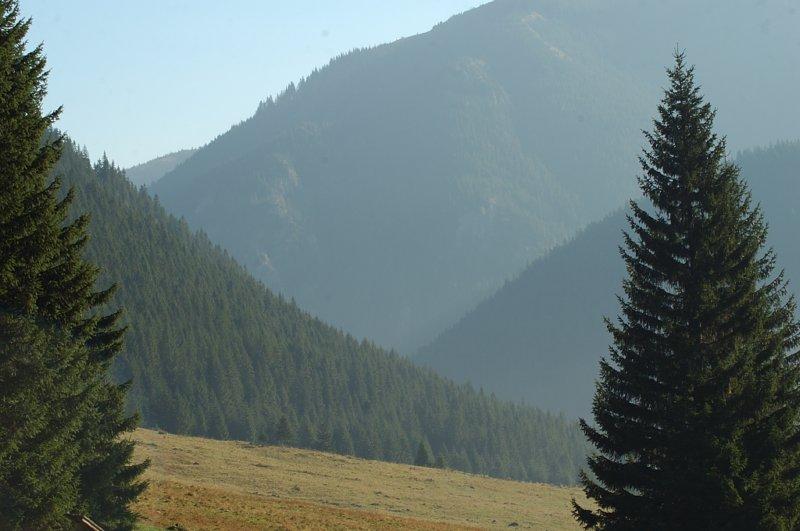Dolina Chochołowska - Przez zielone łąk kobierce