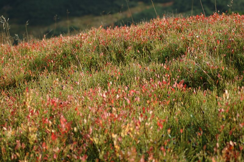 Rdzawo-jesienne jagody stopione w zieleni