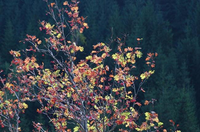 A tam teraz także jesień
