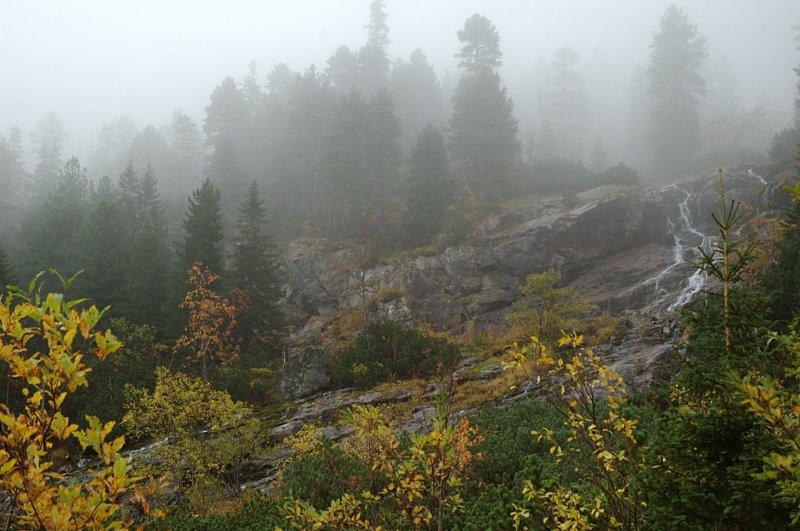 W tym ciemnym, mglistym, głuchym lesie